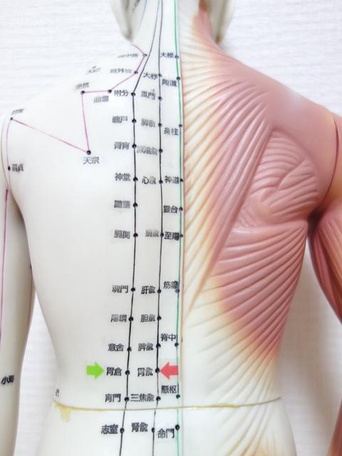 胃痛・胃もたれ | 心と体に香るエッセンス…|レディース鍼灸 ...