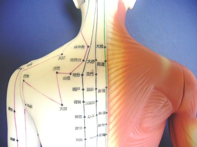 asp_shoulder_model_001
