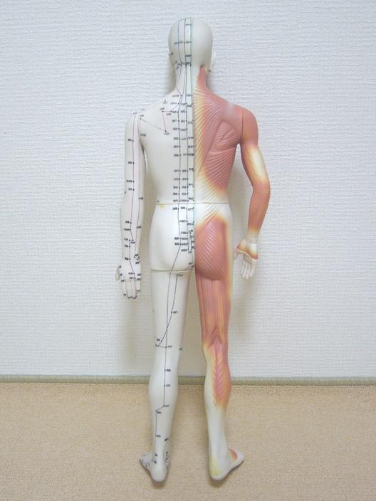 body_back_001