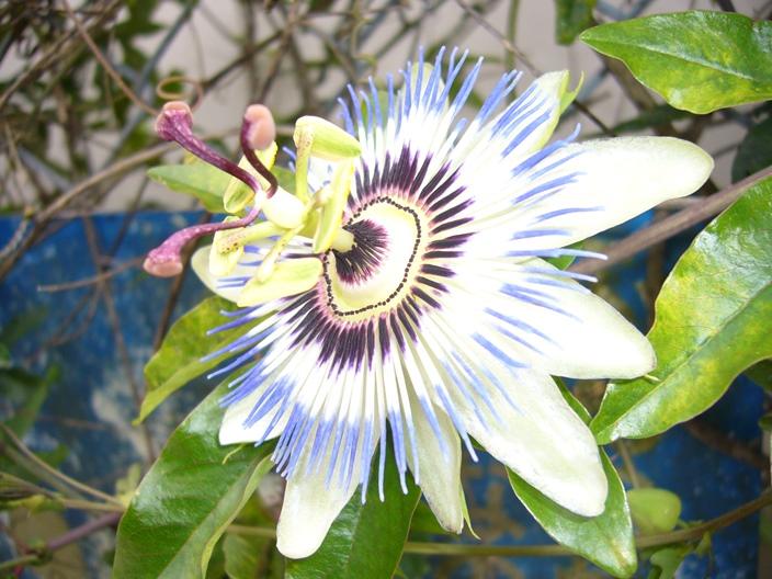 flower_20110619_001