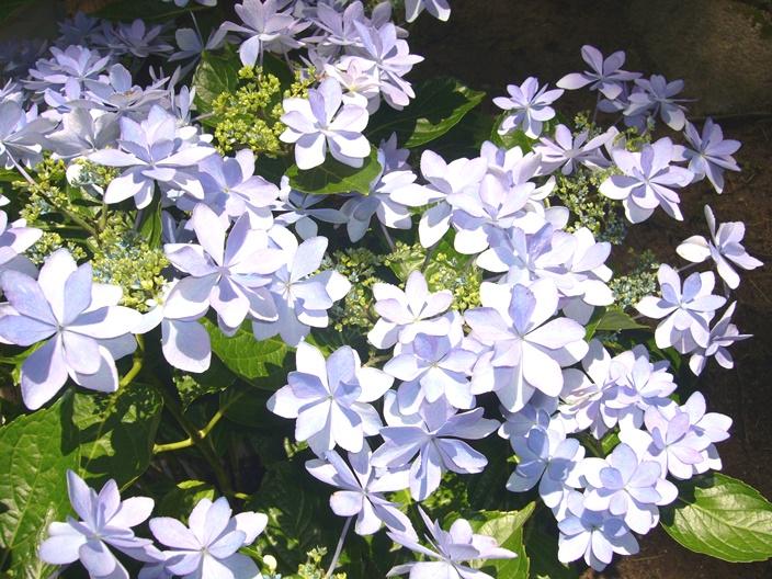 flower_20110621_002
