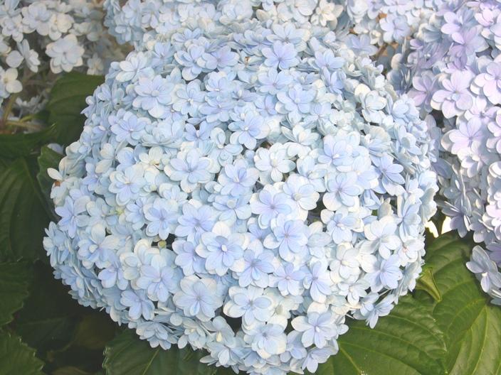 flower_20110621_003