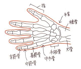 hand_bones_001