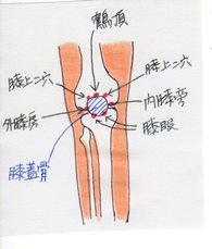 knee_front_il_001