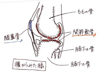 knee_joint_side_yk_001