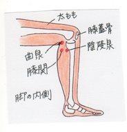 knee_side_il_001