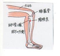 knee_side_il_002