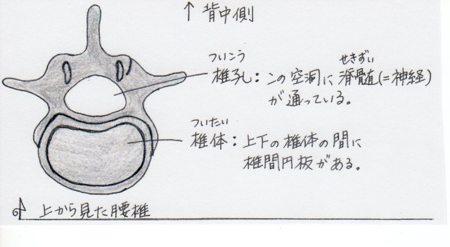 lumbar_vertebrae_yk_001