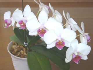 orchid_20110619_001