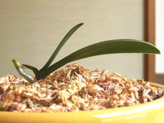 orchid_20150606_002_02
