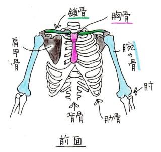 skeleton_002_02